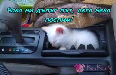 Спящо котенце