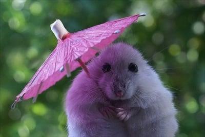 Мишле с чадърче