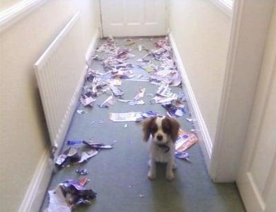 Пакост на куче