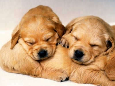 Спящи ангелчета