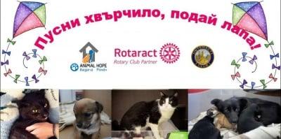 """Заповядайте на 2 юли в Пловдив за инициативата в помощ на бездомните животни """"Пусни хвърчило, подай лапа"""""""