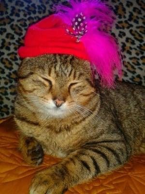 Моят принц Шишко Луи 21 !  Котаракът слънце
