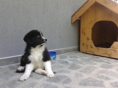 Най-новият член на нашето семейство!