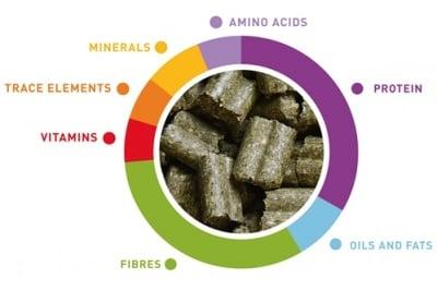 Wellness Adult Премиум храна за мини зайци