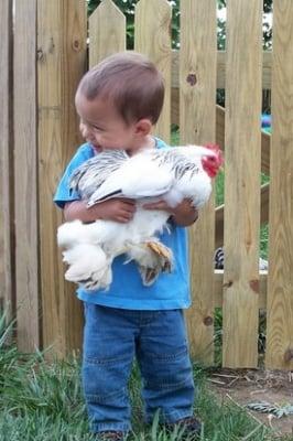Дете прегръща бяла кокошка