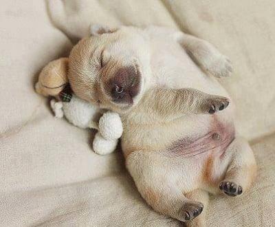 Лека нощ ♥