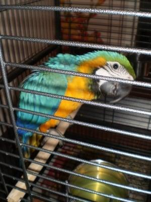 Един красив пернат приятел :)