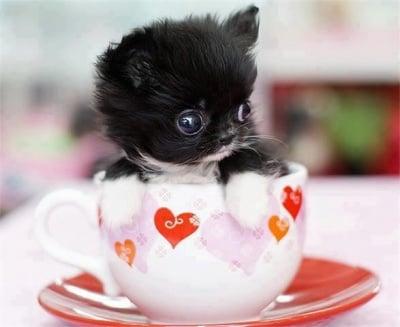 Sweet kitty in cap