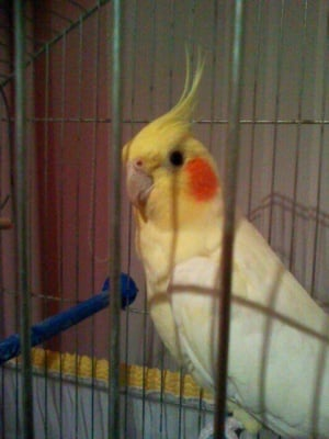 Моето папагалче Роко
