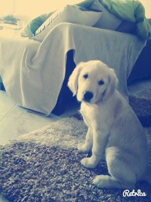 Моето куче Лайди