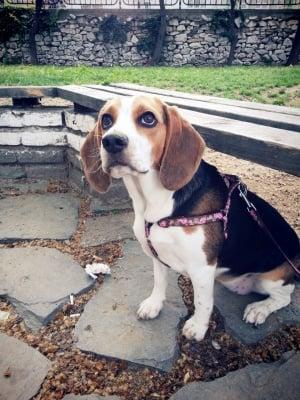 сладката Моли с уши като пържоли:)