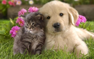 Best Friends ...