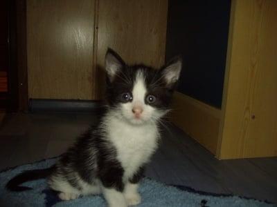 Маша, която се оказа Мишо :)