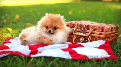 Днес ще си направим пикник