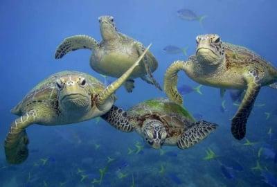 23 Май - Световен ден за защита на Морските костенурки