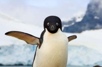 Защо пингвините не летят?