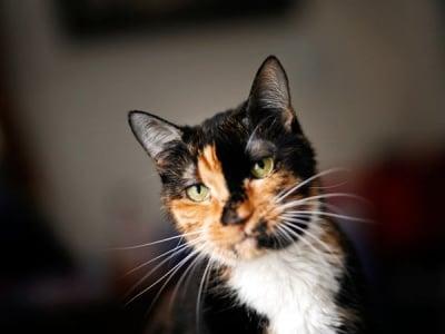 Домашна котка се завърна у дома след 320 км пътешествие