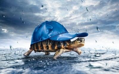 Костенурка под дъжда