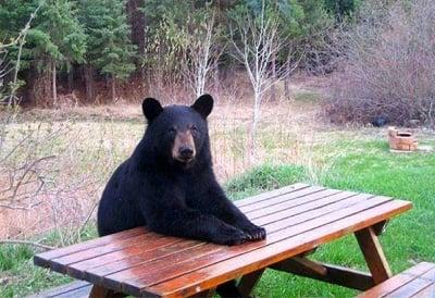 """""""Къде ми е салатата?"""""""