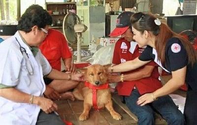 Бездомно куче спаси изхвърлено на боклука бебе