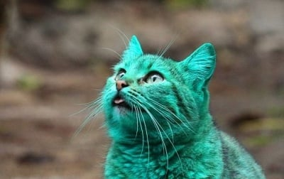 Боядисана котка от Варна