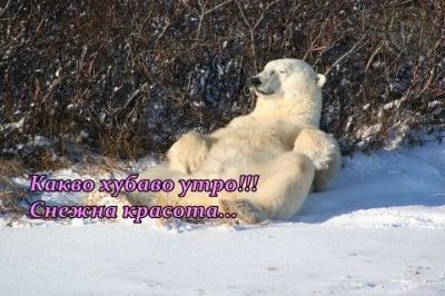 Снежна утрин