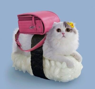 Бяла котка с розова чанта върху суши
