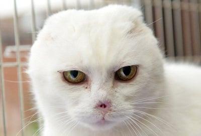 Чарли, котето без нос и уши