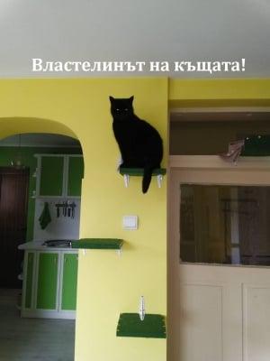 Властелинът на къщата