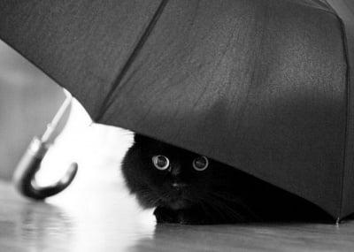 Черно коте под чадър