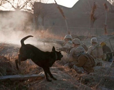 Черно куче на война