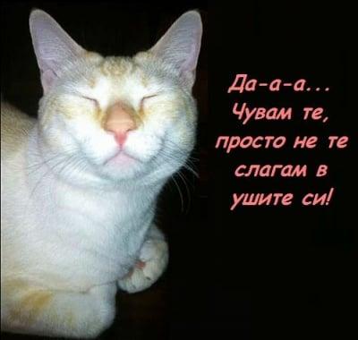 Чуват ли ни котките, когато ги викаме?