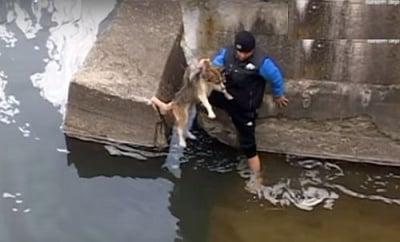Неистова благодарност на куче, спасено от сигурна смърт