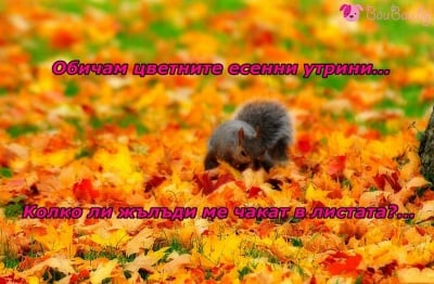 Цветно есенно утро