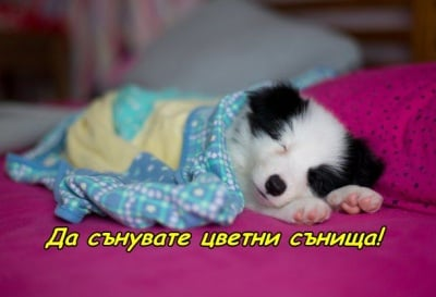 Цветни сънища