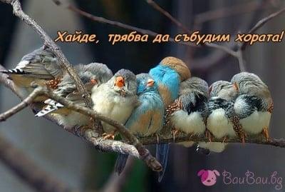 Да се събудиш с птича песен - безценно!