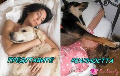 Да спиш с кучето си