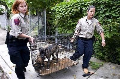 Действаща полиция за животни