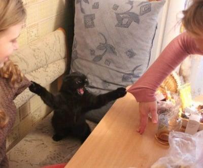 Деряща котка