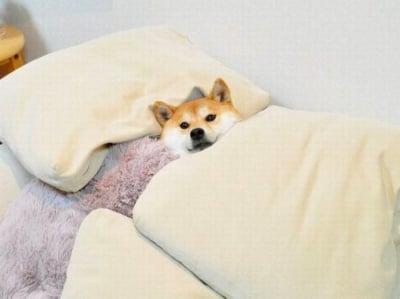 Ставай вече поспаланко-о-о