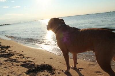 Дръжте кучето си под око, докато е във водата