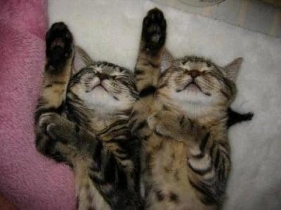Две шарени котки