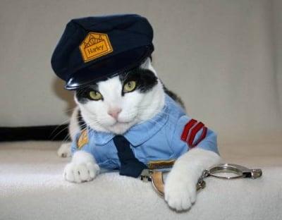 Котешка полиция