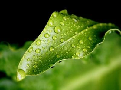 Фактори на външната среда за възникване на болестите