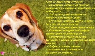 Февруари - месец на отговорните стопани на животни