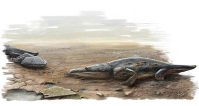 Палеонтолози откриха фосил на огромна рибоядна амфибия