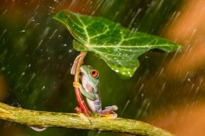 Жабка под дъжда