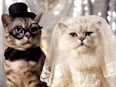 """""""Скъпи младоженци..."""" :)"""