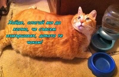 Горкото гладно коте!