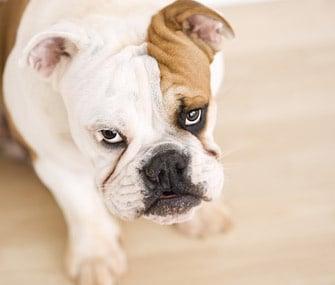 """""""Моето куче не  хапе"""" - защо ветеринаря не вярва на 100%?"""